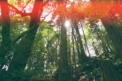 Jungle trees forest vintage nature background. Wallpaper Royalty Free Stock Images