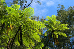 Jungle trees and plants Stock Images