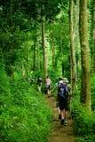 Jungle trek Royalty Free Stock Photography