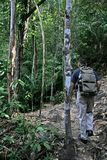 Jungle Trekking Stock Photography
