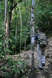 Jungle Trekking. An explorer jungle-trekking in the forest of Bako National Park, Sarawak, Malaysia Stock Photography
