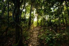 Jungle trekking on Koh Phangan Royalty Free Stock Photography