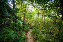 Jungle trekking on Koh Phangan Stock Photos