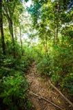 Jungle trekking on Koh Phangan Stock Photography