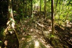 Jungle trekking on Koh Phangan Stock Images