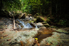 Jungle trekking on Koh Phangan Stock Image