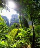 Jungle tropical forest Stock Photo