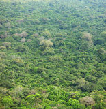 Jungle. Tropical forest from bird`s eye view. Sri Lanka Royalty Free Stock Images