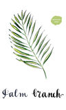 Jungle tropical palm tree green leaf Royalty Free Stock Photos