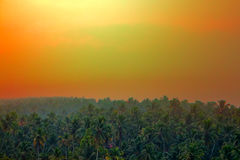 Jungle tropical Paradise at sunset wide landscape. Royalty Free Stock Image