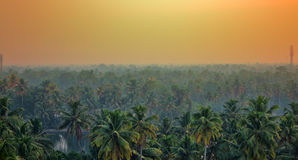 Jungle tropical Paradise at sunset wide landscape. Royalty Free Stock Photo