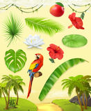 Jungle. Tropical plants. Vector icon set. Jungle. Palm, banana, mango, parrot, water lily and hibiscus. Set of leaves and flowers. Tropical plants. 3d vector Royalty Free Stock Image