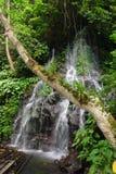 Jungle tropicale avec l'arbre, le radeau et la cascade à écriture ligne par ligne Images stock