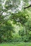 Jungle tropicale de forêt tropicale en Thaïlande images stock