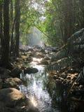Jungle tropicale de l'Asie Photographie stock