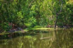 Jungle tropicale et leurs habitants près de Wangetti, Queensland, Australie photographie stock libre de droits