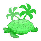 Jungle turtle Royalty Free Stock Photo