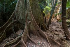 Jungle undergrowth Stock Images