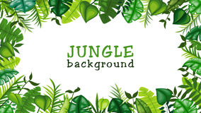 Jungle vector background Royalty Free Stock Image