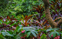 Jungle Vegetation. A variety of tropical ferns, shrubs and trees with green and red leaves Stock Photos