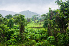 Jungle Vietnam Royalty Free Stock Photos