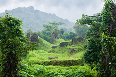 Jungle Vietnam myson area in cloudy day Royalty Free Stock Photography