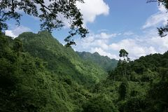 Jungle in Vietnam. A view of the jungle in Vietnam. Specifically the jungle in Phong Nha Ke Bang National Park in Vietnam stock photography