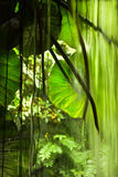 Jungle view, big leaves and falling Stock Photos
