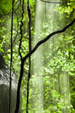 Jungle view with falling water Royalty Free Stock Image