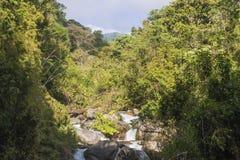 Jungle View Stock Photo