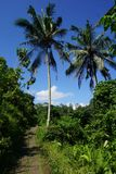 Jungle view Rice field Bali with clouds and palm trees Stock Photos