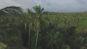 Jungle View Ubud Bali Aerial 4k. 4k aerial footage of a jungle in Ubud, Bali, Indonesia stock video