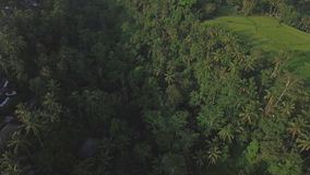 Jungle View Ubud Bali Aerial 4k. 4k aerial footage of a jungle in Ubud, Bali, Indonesia stock footage