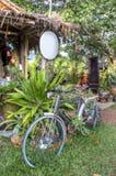 Jungle view, Wang Nam Kiew, Thailand Royalty Free Stock Image