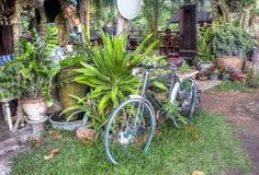 Jungle view, Wang Nam Kiew, Thailand Stock Photography