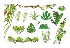 Jungle vine. Cartoon rainforest leaves and liana overgrown plants. Isolated vector set. Of exotic jungle plant, palm leaf and green branch illustration vector illustration