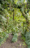 Jungle Walk. A maintained jungle trail through the mountains in Costa Rica Stock Images