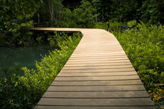 Jungle Walkway Royalty Free Stock Images