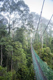 Jungle Walkway through Cloudforest Stock Images