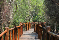 Jungle walkway Stock Image