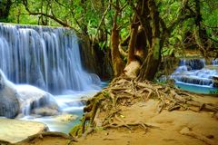 Jungle waterfall and ancient tree with prominent roots in Kuang Si near Luang Prabang in Laos, Southeast Asia. Two waterfalls can be seen on the left and on royalty free stock image