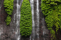 Jungle Waterfall Royalty Free Stock Photos