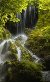 Jungle waterfall with green plants Royalty Free Stock Photos