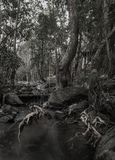 Jungle wet summer forest, black and white photo, Thailand Royalty Free Stock Photos