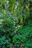 Jungle Royalty Free Stock Images