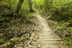 Jungle wooden path Stock Photography