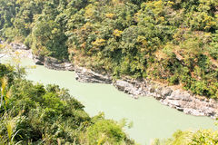 Jungleriver Zdjęcie Stock