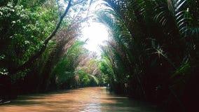 jungles Photos libres de droits