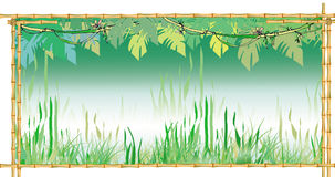 Jungles background. With frame royalty free illustration