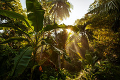 Jungles background Stock Photos